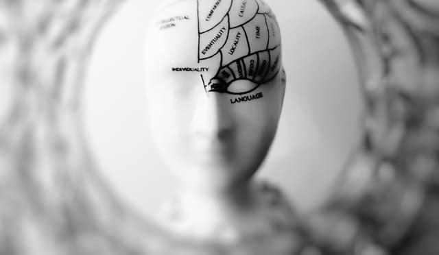 Neurociencia. La ciencia que estudia el cerebro y su funcionamiento.