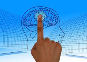 neurociencia y cerebro