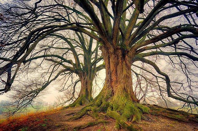 arbol seco con grandes ramas